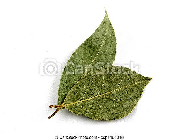 Seasoning, bay leaf - csp1464318
