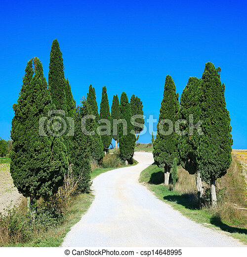 Tuscany, Cypress Trees white curved road rural landscape, Italy, Europe - csp14648995