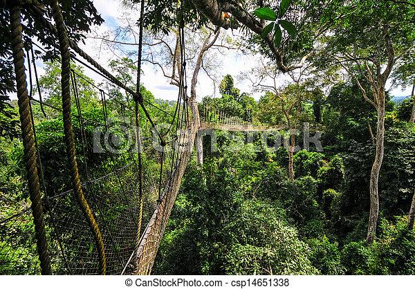 Canopy Walkway of Kakum National Park - csp14651338