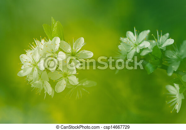 Abstract springtime background with apple tree blossoms - csp14667729