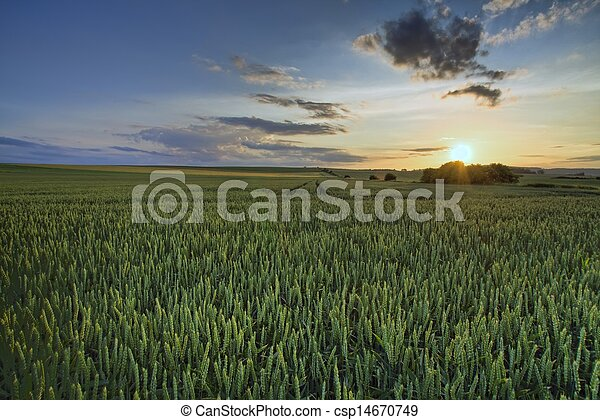 Green field in sunset - csp14670749