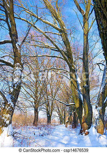 Trees covered with snow near river in winter - csp14676539