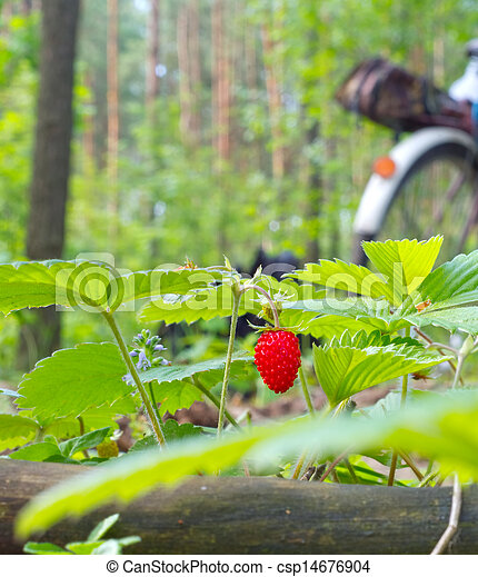 Wild strawberry berry growing in natural environment - csp14676904