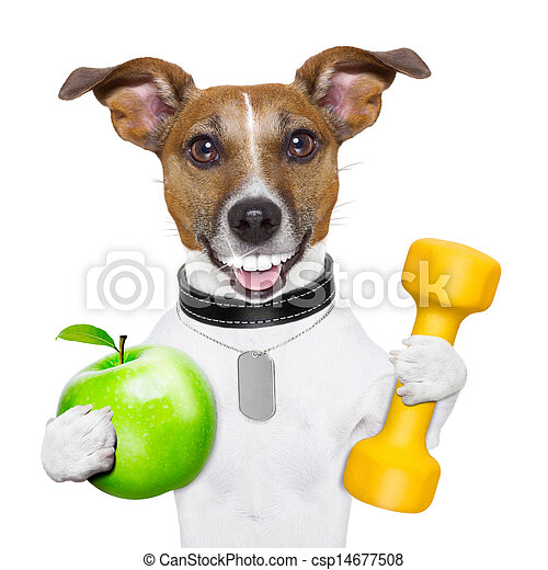 fitness and healthy dog - csp14677508