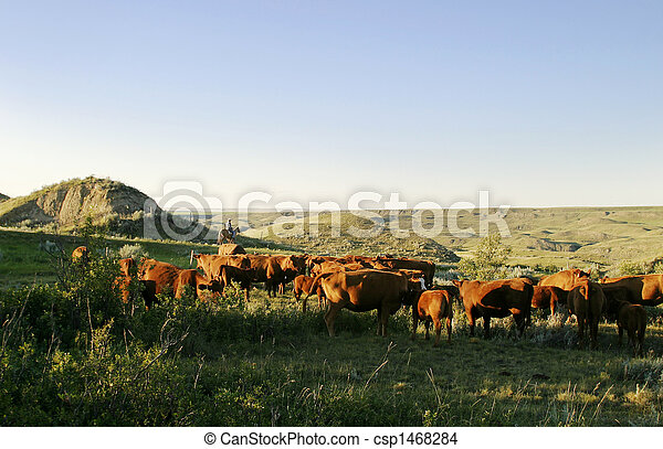 Cowboys on a cattle round up.