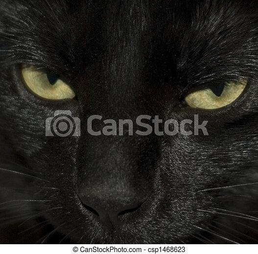 Close-up of black cat\\\'s eyes