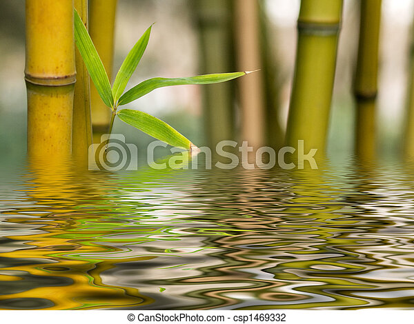 Bamboo water reflection - csp1469332