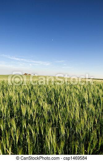 Prairie Farmland - csp1469584