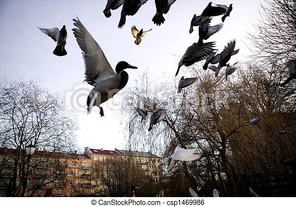 menekülés,  sihlouette, madarak - csp1469986