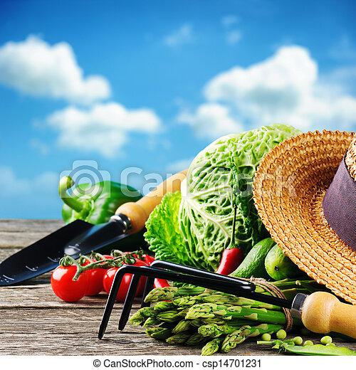 Fresh organic vegetables and garden tools - csp14701231