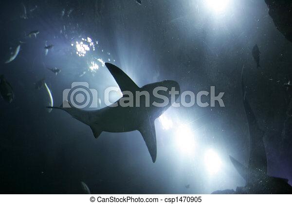 shark from below - csp1470905