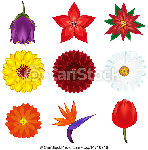 vector clip art of collection of popular and exotic flowers, Natural flower