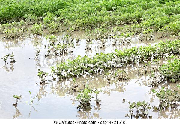 Agriculture - csp14721518