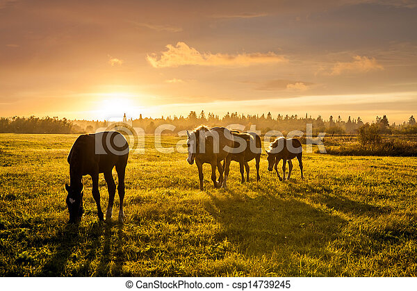 Rural landscape with grazing horses on pasture at sunset - csp14739245