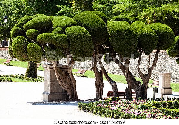 Outstanding cypress trees in Retiro Park in Madrid, Spain - csp14742499