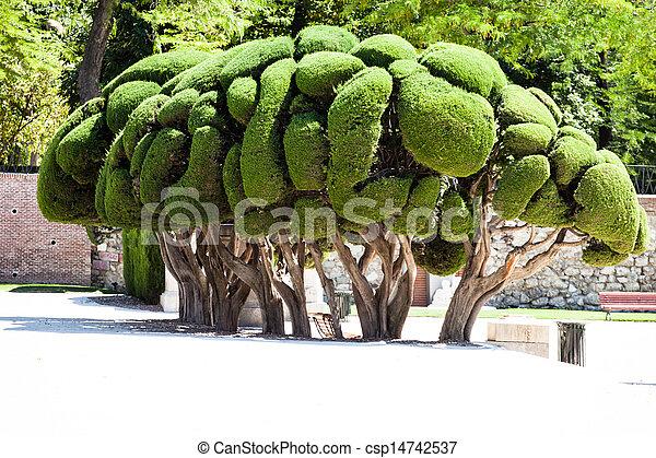 Outstanding cypress trees in Retiro Park in Madrid, Spain - csp14742537