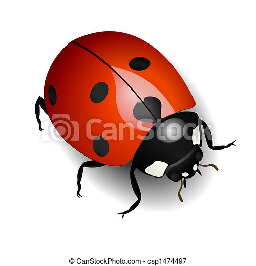 Ladybug - csp1474497