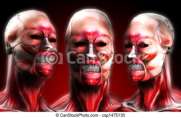 Heads Of Muscle 3 - csp1475130