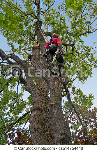 dead tree branches being cut by tree surgeon. - csp14754440