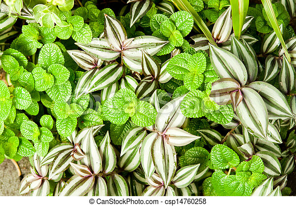 Ornamental plants for landscaping. - csp14760258