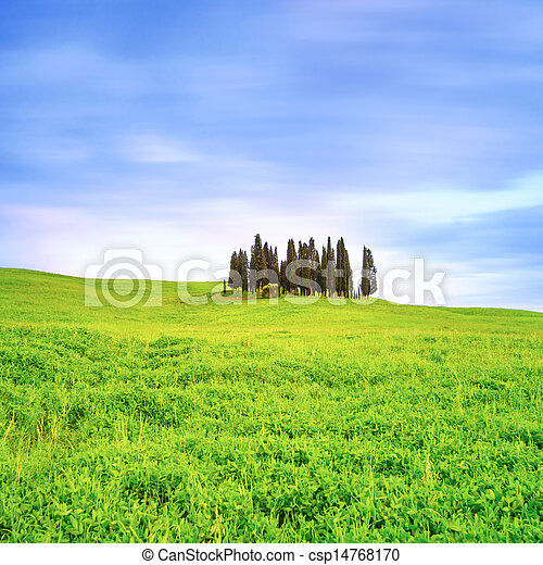 Cypress group and field rural landscape in Orcia, San Quirico, Tuscany. Italy - csp14768170