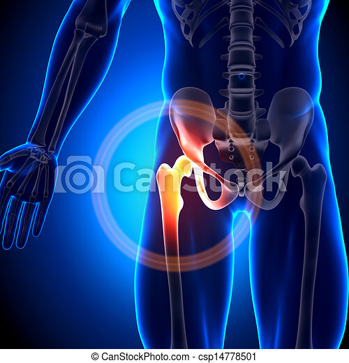Hip Joint - Anatomy Bones - csp14778501