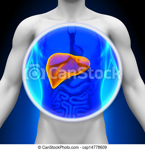 Medical X-Ray Scan - Liver - csp14778609