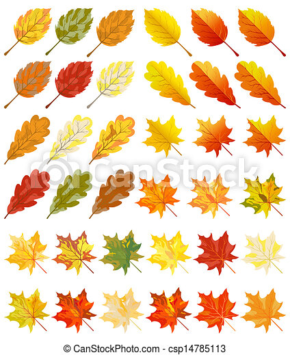 of color autumn leaves - Autumn Leaves Clipart