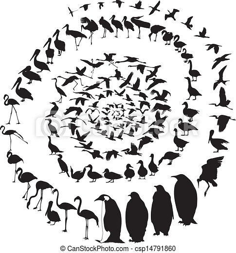 Birds Waterfowl in spiral - csp14791860