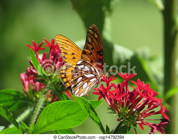 butterfly on red flowers - csp14792394