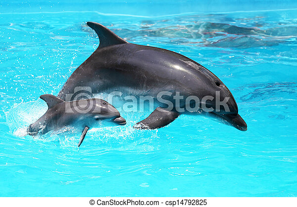 Dolphin with a baby floating in the water - csp14792825
