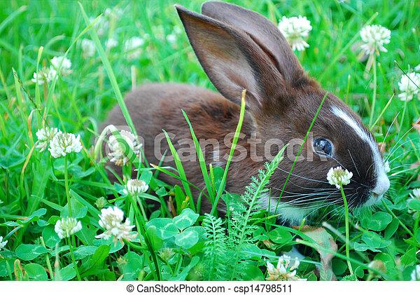 petit, noir blanc, lapin, séance, herbe - csp14798511