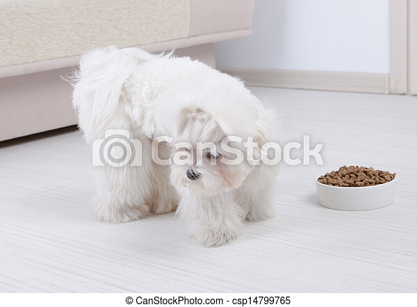 Dog refusing to eat dry food - csp14799765