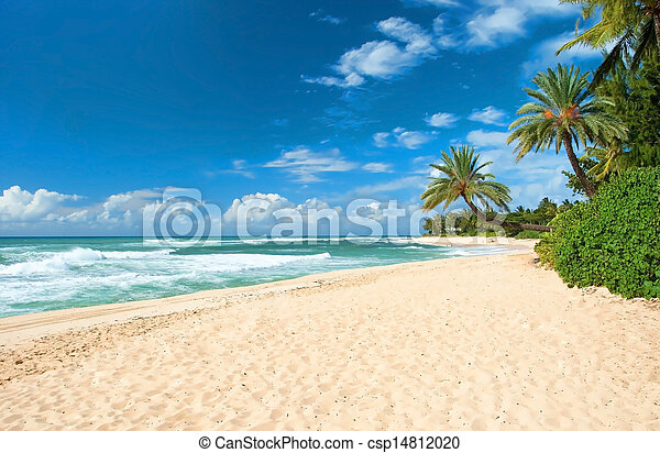 Untouched sandy beach with palms trees and azure ocean in background   - csp14812020