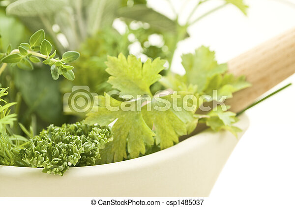 Herbs with Pestle and Mortar Closeup Lframe - csp1485037