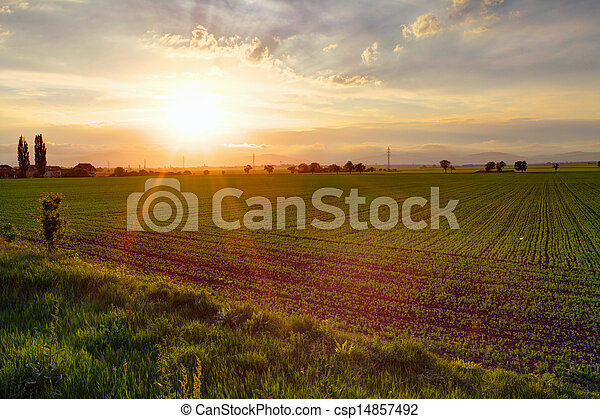 Green field at sunset - csp14857492