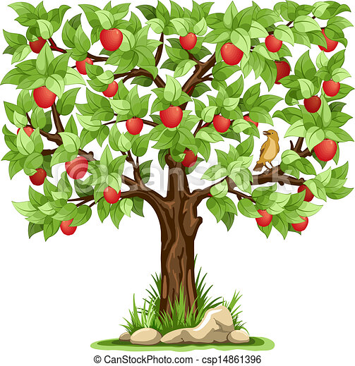 apple tree isolated on white background csp14861396 - Search Clip Art ...