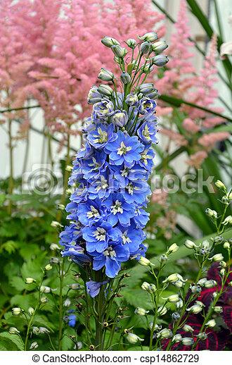 Blue delphinium flowers - csp14862729
