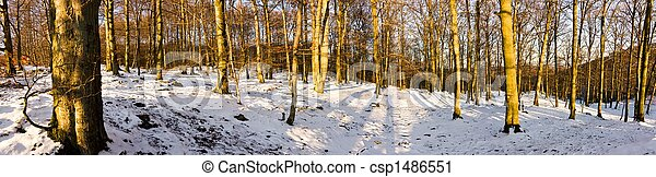 Forest panorama - csp1486551