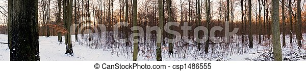 Forest panorama - csp1486555