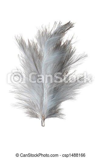 White feather - csp1488166
