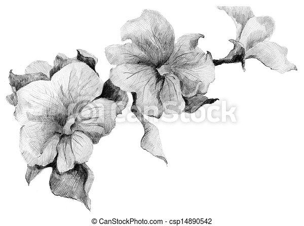 Bouquet, croquis, fleur,  Pétunia - csp14890542