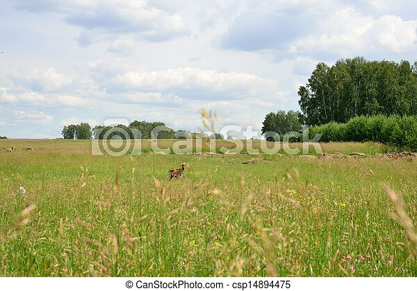 Rural landscape with grazing animals - csp14894475
