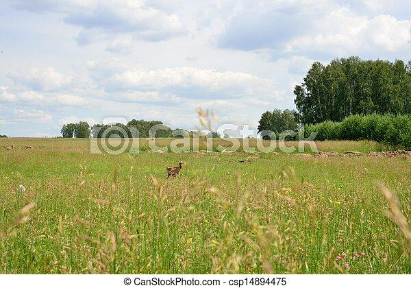 Rural landscape with grazing animals - csp14894475