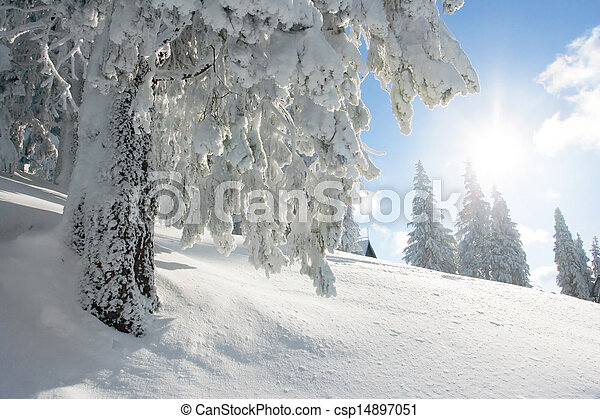 Sunshine and pine tree on winter
