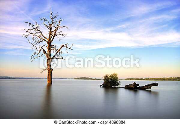 Old tree in lake at sunrise landscape - csp14898384
