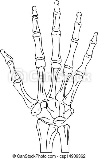 Clip Art Vector of Hands anatomy teaching model with a ...