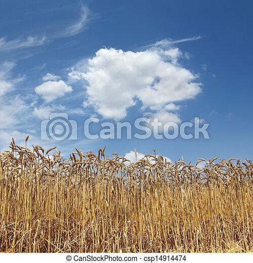 Agriculture - csp14914474