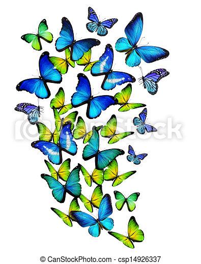 Dessins de couleur beaucoup papillons isol fond - Papillon dessin couleur ...