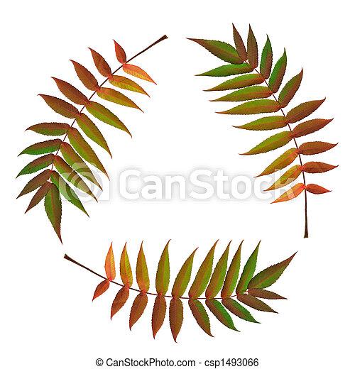 Fern Leaf Symbol - csp1493066
